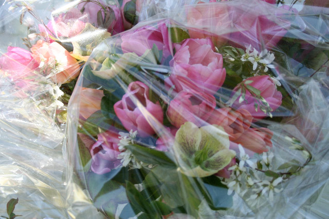 Hellebores and Tulips in May / bouquets packed for travel